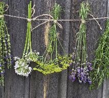 Suszenie ziół: jak prawidłowo suszyć zioła?