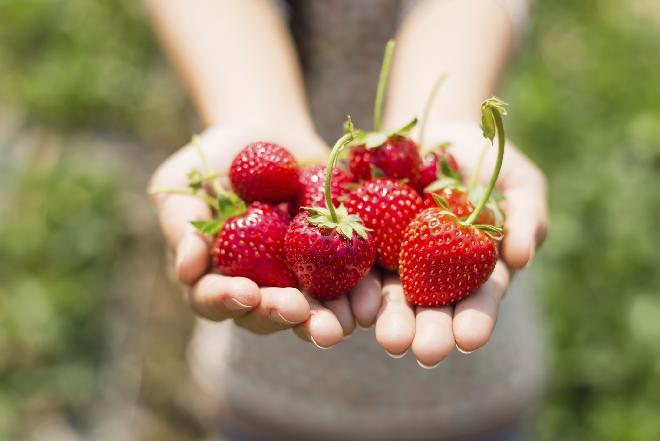 Czy truskawki odchudzają czy tuczą? Czy można się odchudzić jedząc truskawki? - sunela.eu